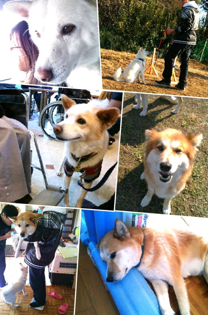犬たちの画像20140108