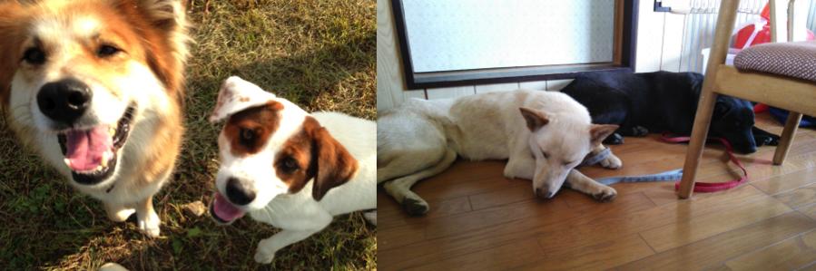 ある1頭の保護犬との出会いが、人生を変える